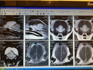 Фотозвіт модулю  Основи МРТ діагностики у ветеринарній практиці. Лектори Анатолій Корольов та Павло Каратаєв. Vet expert