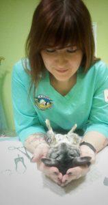 15-16.04. Vet expert base. Марія Стацевич. Гризун і кролик на прийомі: для ветеринарних лікарів, які не є вузькими фахівцями